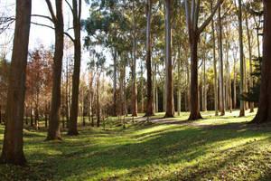 Tall trees stock