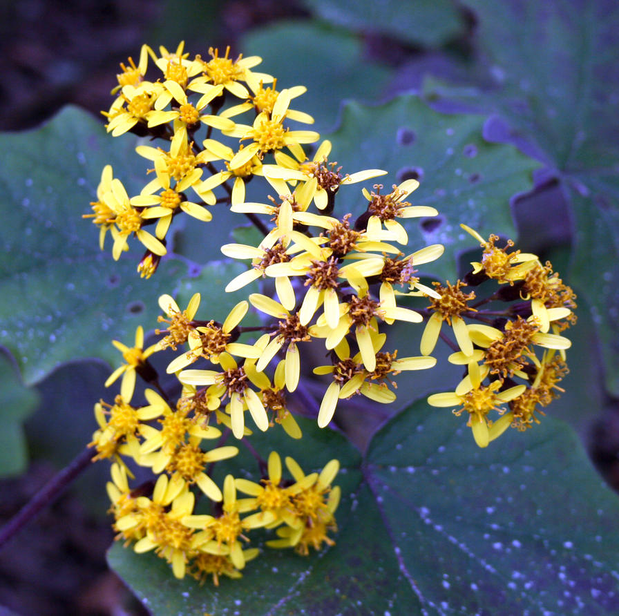 Yellow flower stock by CathleenTarawhiti