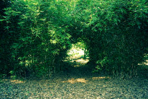 Tree stock - hole in the hedge by CathleenTarawhiti