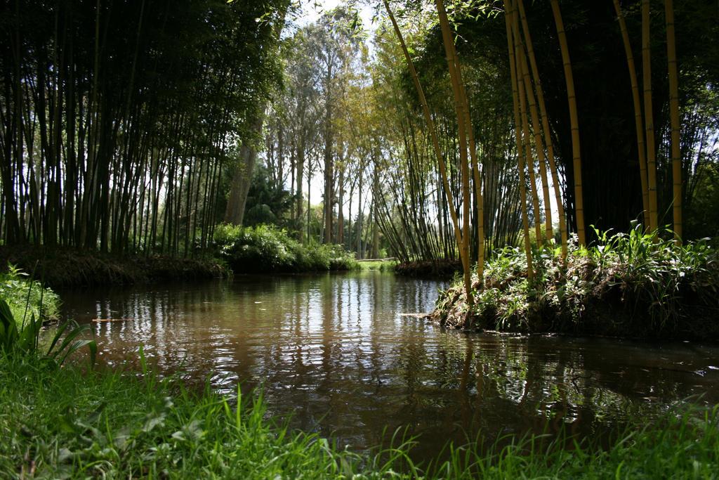 Swamp stock 2 Taitua New Zealand
