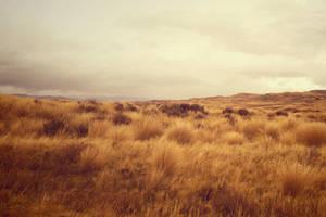 Tussock land Waiouru New Zealand by CathleenTarawhiti