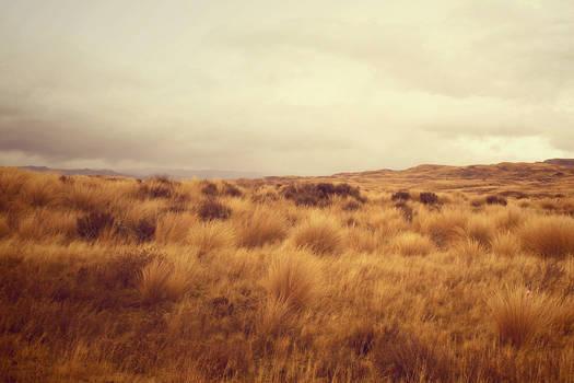 Tussock land Waiouru New Zealand