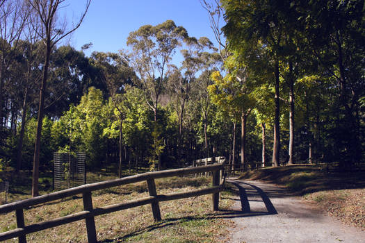 Forest walkway Taitua arboretum New Zealand