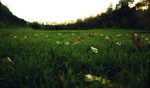 Grass by CathleenTarawhiti