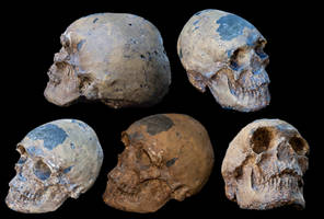 Worn skull x 5