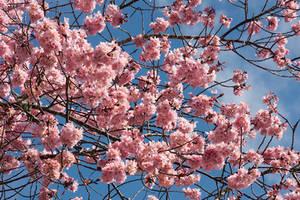 Blossom stock 2