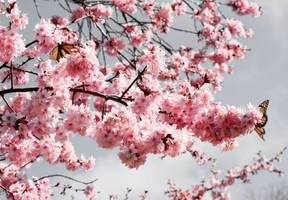 Blossom stock 11