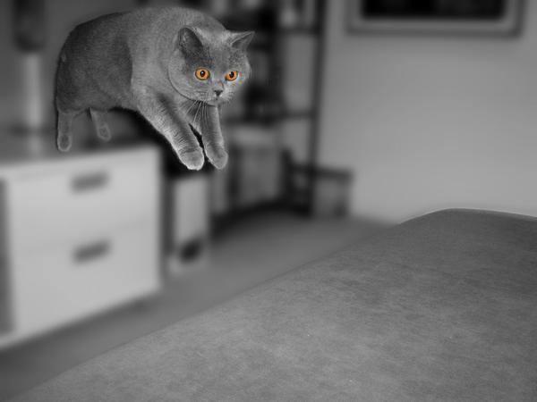 Cat Jump by o0jessica0o