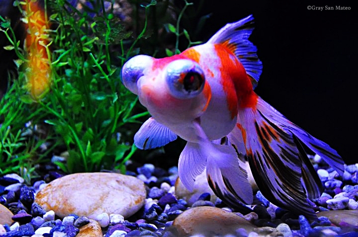 What kind of fish is this yahoo answers for One eyed fish