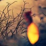 Yellow leaf...