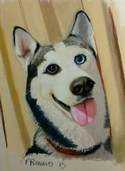 Cortana the husky