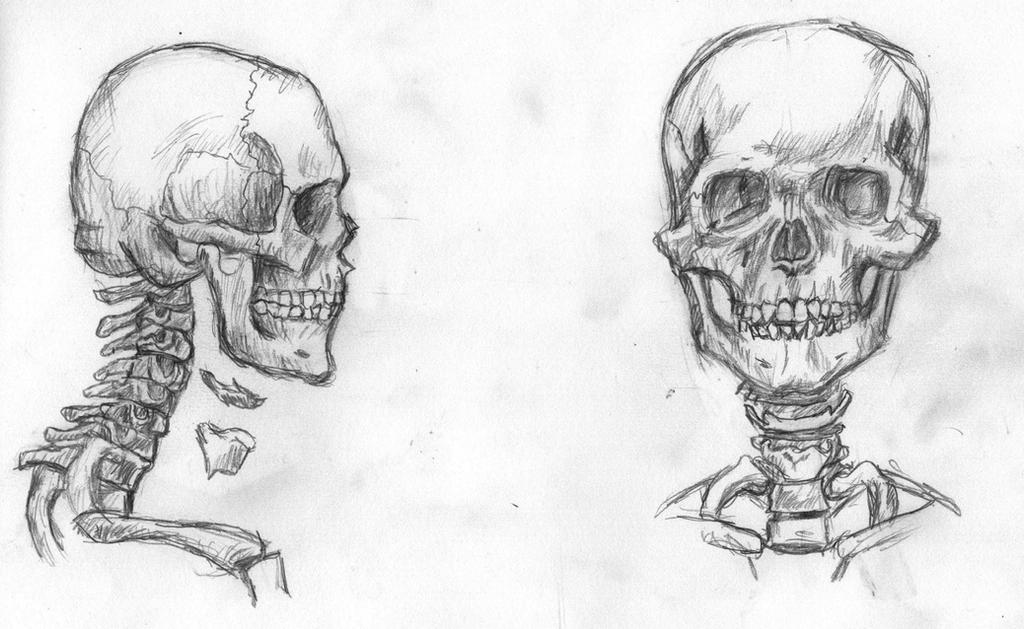 Head And Neck Skeleton By Laz0rbear On Deviantart