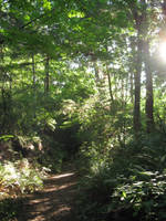 Sunlit path by Katalalyn