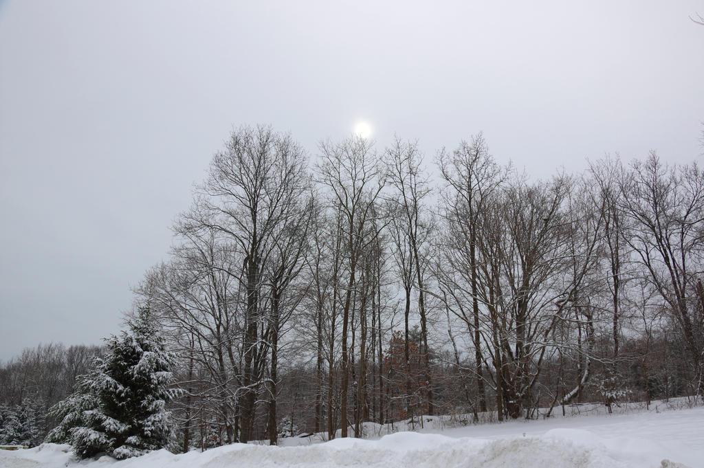 Gloomy Sun by billy