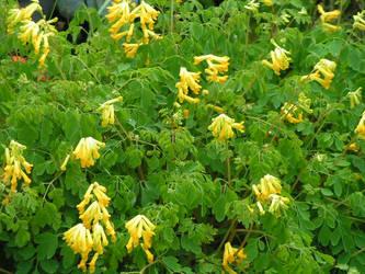 Yellow flowers by bigmomma63