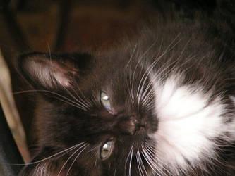 Mr. Snuggles by bigmomma63