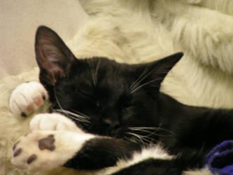 Mr Snuggles sleeping by bigmomma63