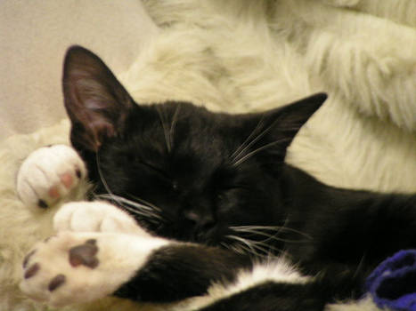 Mr Snuggles sleeping