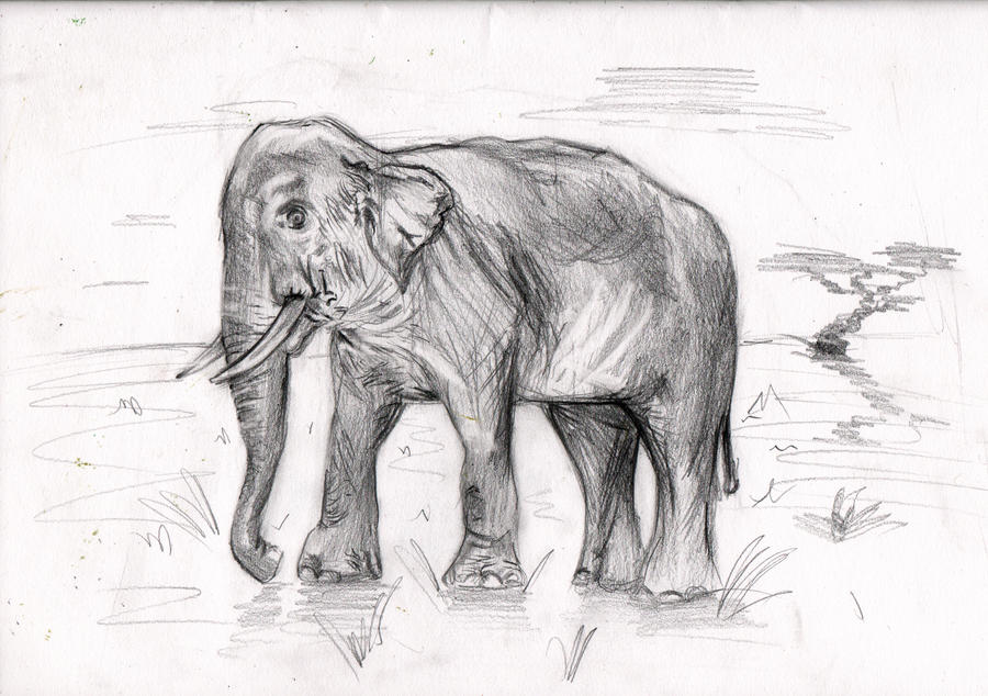 Pencil drawing elephant by iycliched