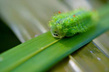 Needle Caterpillar by T-Six