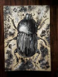 Bug by JMaling