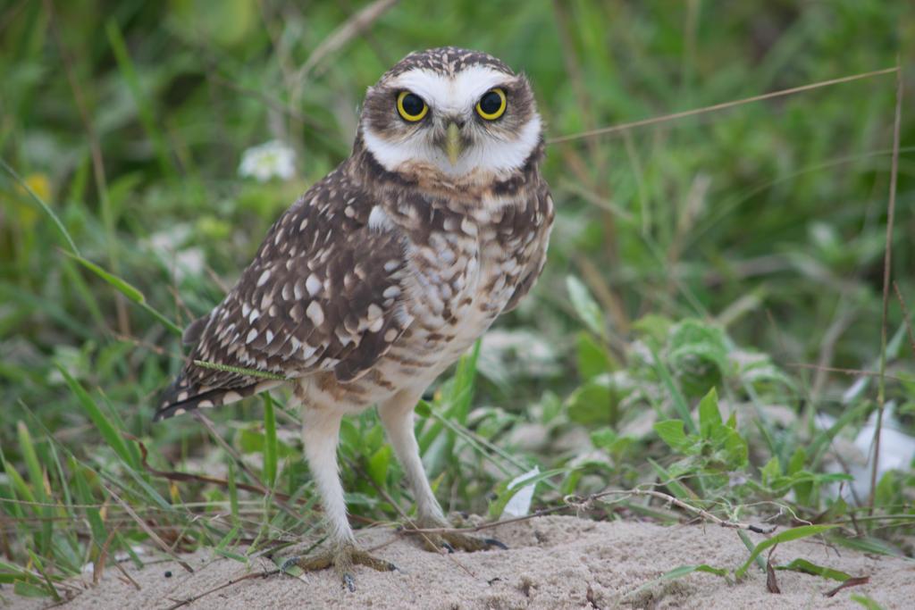 OWL by NesthorVianna