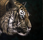 tiger colorpencil On the prowl