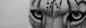 Snowleopard in Graphite