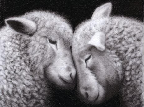 sheep in charcoal by rasberry6