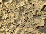 ground texture 2 by asmozz