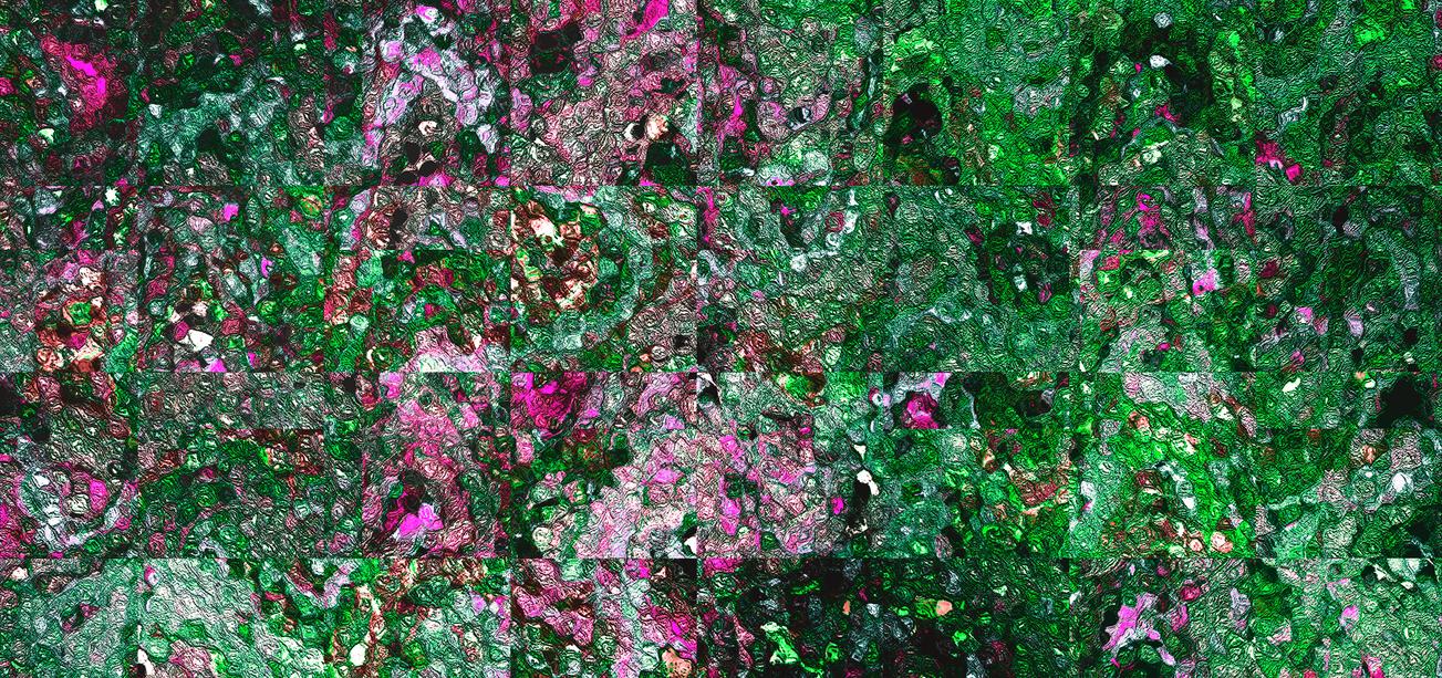 Jardin de roses by Juanilla