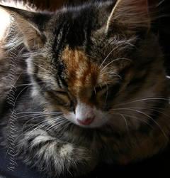 Kitten Dreams by SharonLeggDigitalArt