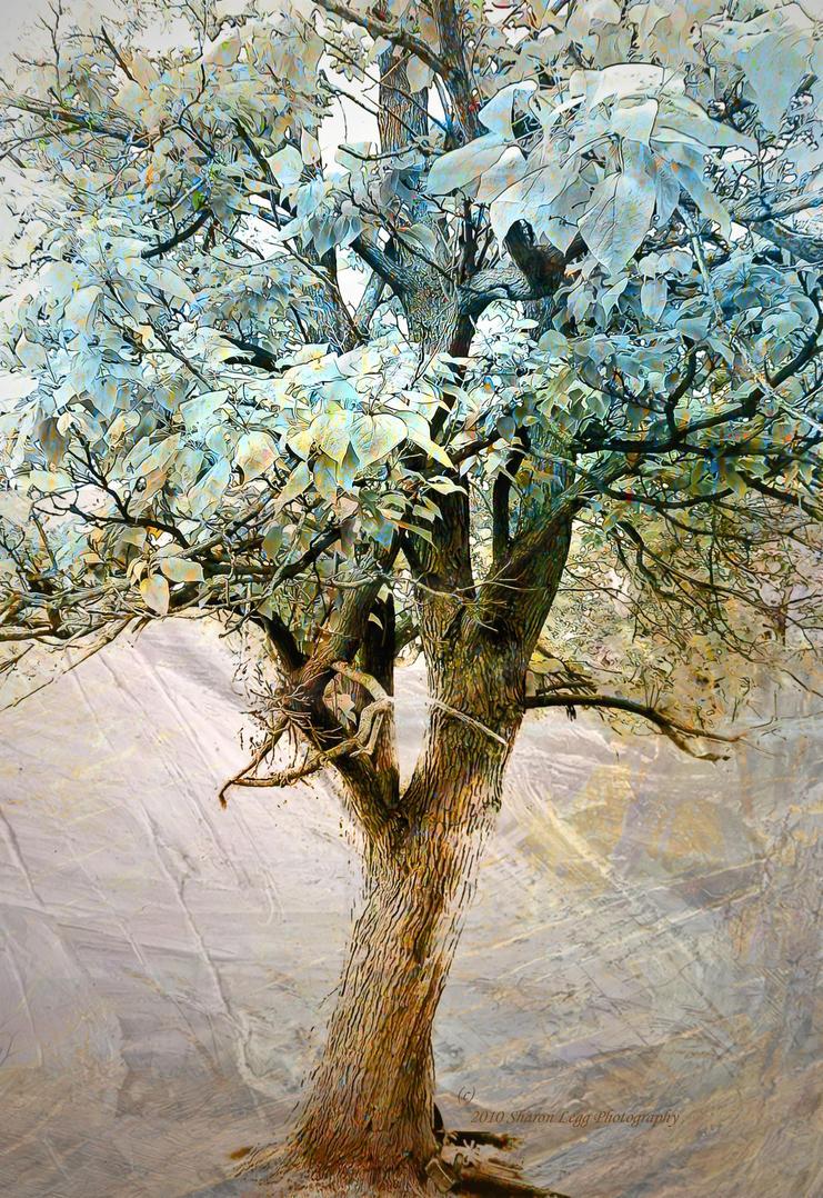 Joe's Ladder by SharonLeggDigitalArt
