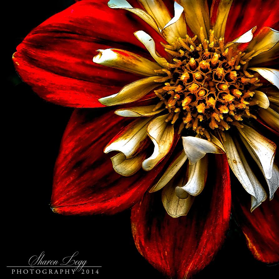 Red by SharonLeggDigitalArt