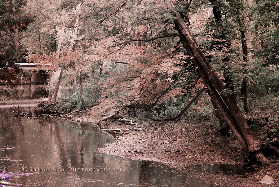Fotografija dana Lazy_autumn_day_copyrighted_sharon_legg_photograph_by_sharonleggdigitalart-d83eqvb