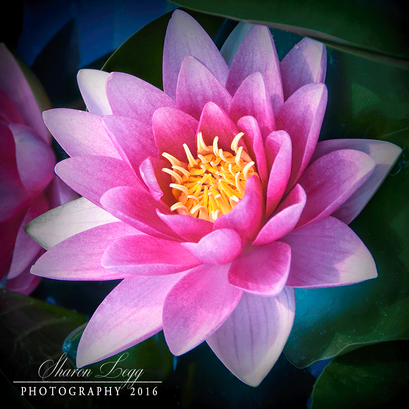 Paradise-In-Pink by SharonLeggDigitalArt