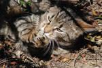 Stupid beloved cat II
