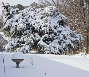 Cedar Tree by MistressVampy
