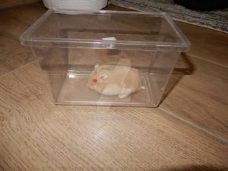 Jordan in a box