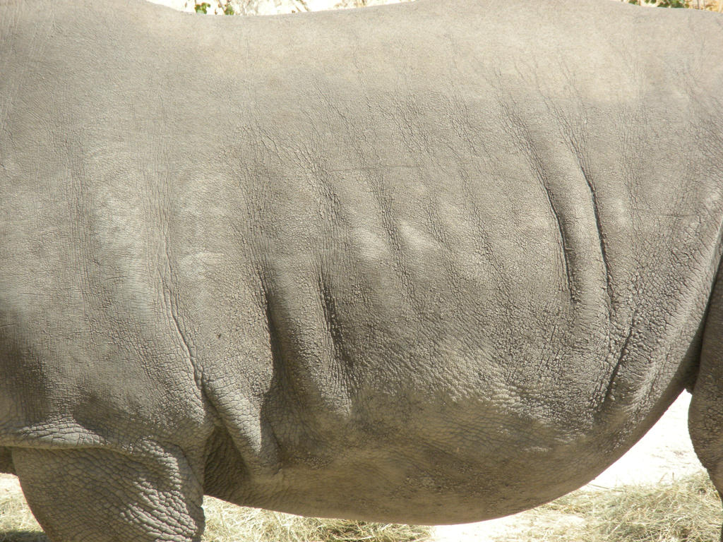 White rhinoceros skin texture by photosammich on DeviantArt