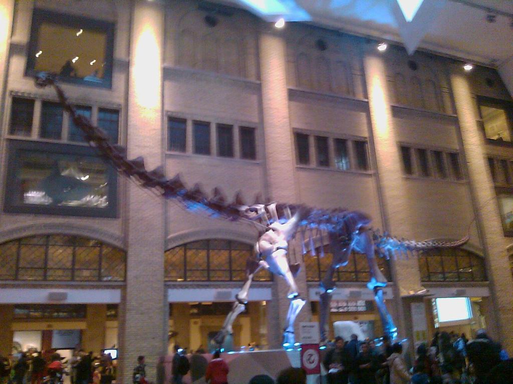 Futalognkosaurus Skeleton