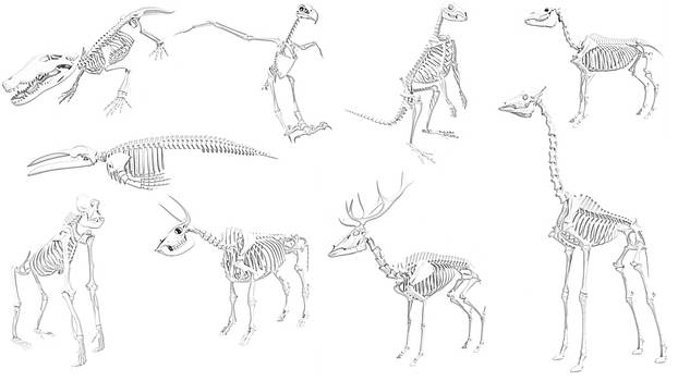 Esqueletos de animales JPG