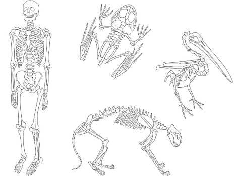Esqueleto humano y esqueletos de animales JPG