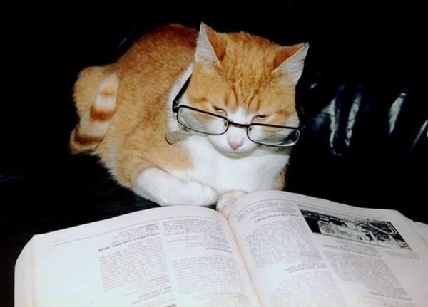 Casper reading a book by BellaCupcake3218