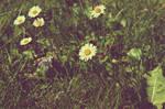 Flowers by Narek173