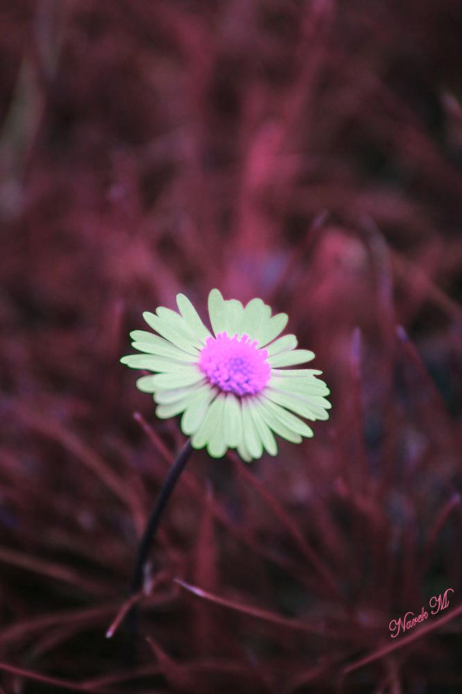 flower 2 by Narek173