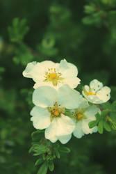 Flowers7 by Narek173