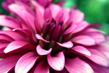 Flower 5 by Narek173