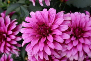 Flowers 7 by Narek173