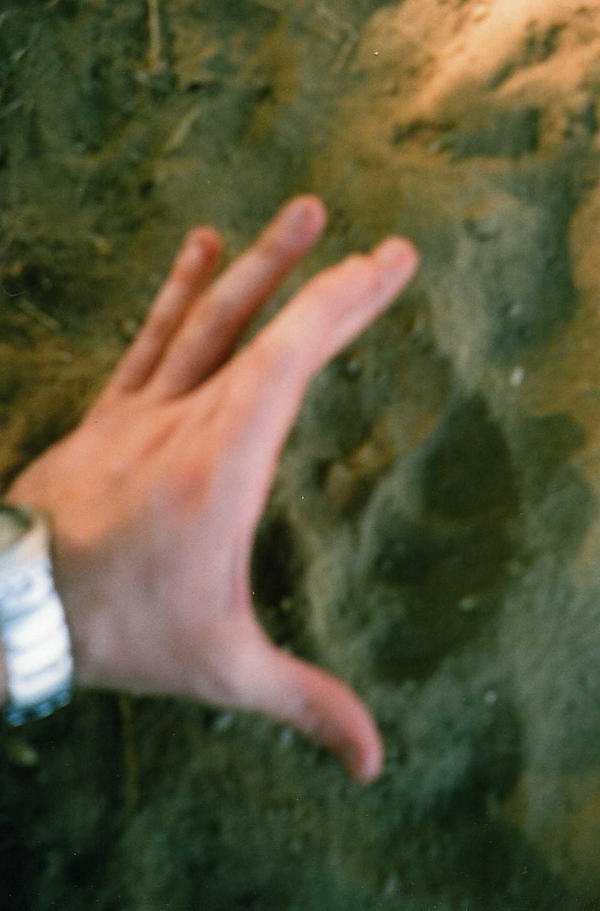 Wolf's track by Kooskia